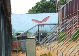 Mural at Magill Training Centre (2012)